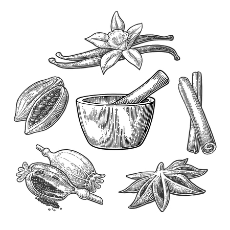 Set of Spices, Mortar and Pestle. Anise star, cinnamon stick, fruits of cocoa beans, vanilla stick and flower, poppy heads and seeds. Isolated on white background. Vector black vintage engraving illustration. Vettoriali