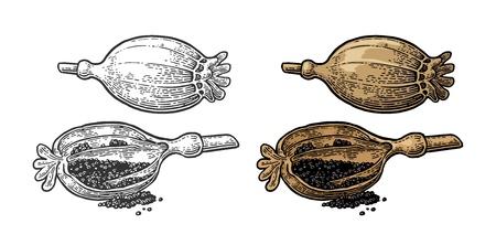 Papaverhoofden en zaden. Vector zwart vintage gegraveerd