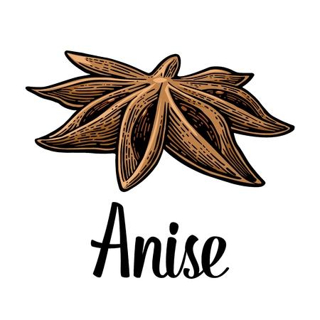 Anise spice fruit with seed. Vector black vintage engraved Ilustração