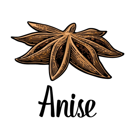 Anise spice fruit with seed. Vector black vintage engraved Illustration