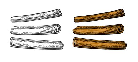 Cinnamon stick set. Vector black vintage engraving