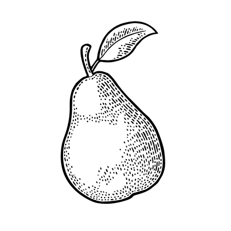 Pear whole. Vintage black engraving Ilustrace