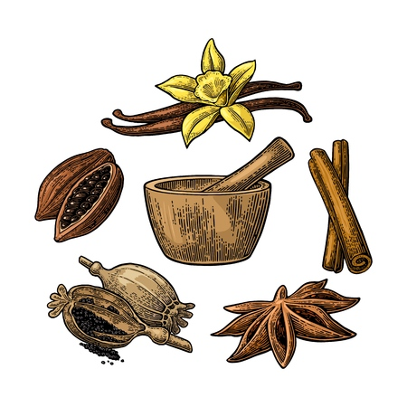 Set of Spices, Mortar and Pestle.. Vintage vector engraved illustration.