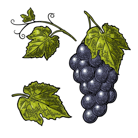 Bunch of berry and leaves icon. Illustration