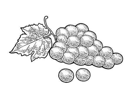 Grappe de raisin avec des baies et des feuilles. Illustration vectorielle noir gravure vintage pour étiquette, affiche, web. Isolé sur fond blanc Banque d'images - 92172086