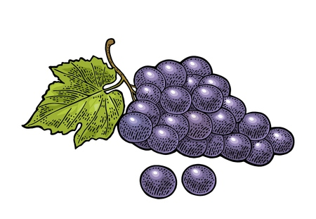 Bunch of grapes with berry and leaves.