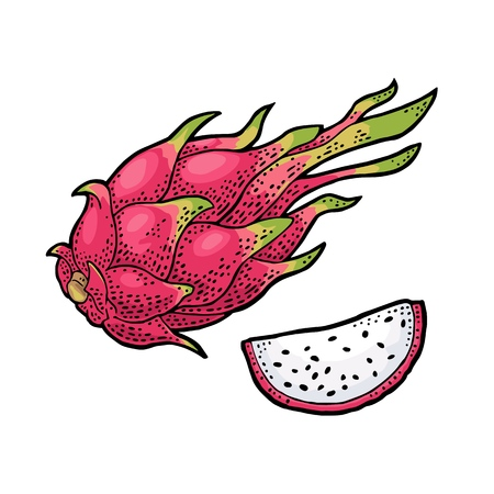 Dragon fruit whole and slice. Vector vintage engraving color illustration for menu, poster. Isolated on white background