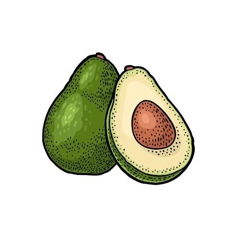 Whole and half avocado with seed. Vector colorf vintage engraving illustration for menu, poster. Isolated on white background Vectores