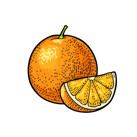 Whole and slice orange. Vector color vintage engraving illustration for menu, poster. Isolated on white background