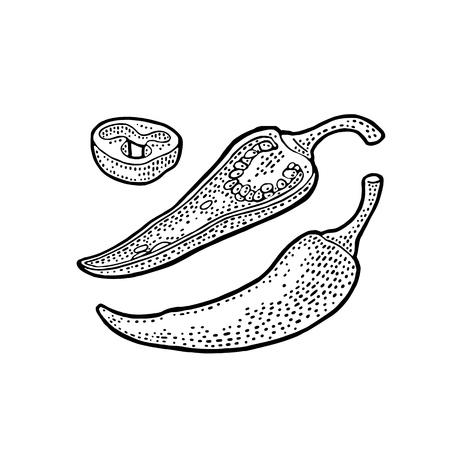 Chili whole, half and slice. Vector vintage engraving. Ilustração
