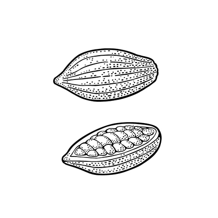 Cacao Vintage gegraveerde vectorillustratie