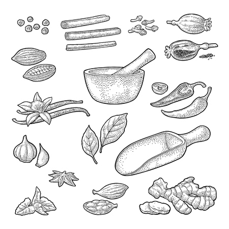 Set of Spices illustration.