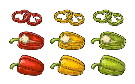 Sweet bell red, green, yellow pepper. Vector vintage color engraving illustration for menu, poster, label. Isolated on white background. Hand drawn design element for label and poster