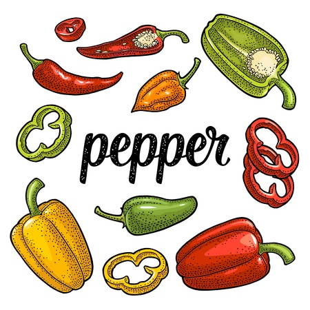 Whole, half , slice, crushed pieces different types of pepper. Sweet bell, chilli, habanero and jalapeno. Vector vintage color engraving illustration. Isolated on white background