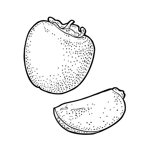 Whole and half persimmon. Vector vintage engraving color Ilustrace