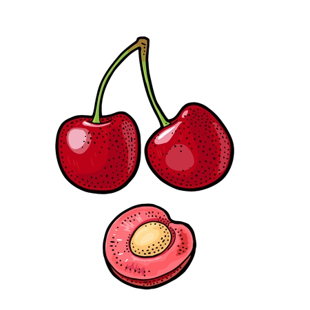 Whole and half cherry berry with seed. Vector vintage engraving color Imagens - 94076044