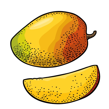 Whole and slice mango. Vector color vintage Ilustração