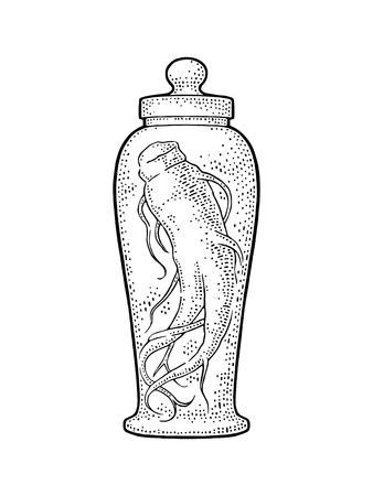 틴 크와 유리 병에 뿌리 인삼입니다. 벡터 조각 전통 의학 화이트 절연 빈티지 검은 일러스트 레이 션. 손으로 그린 디자인 요소 레이블 및 포스터