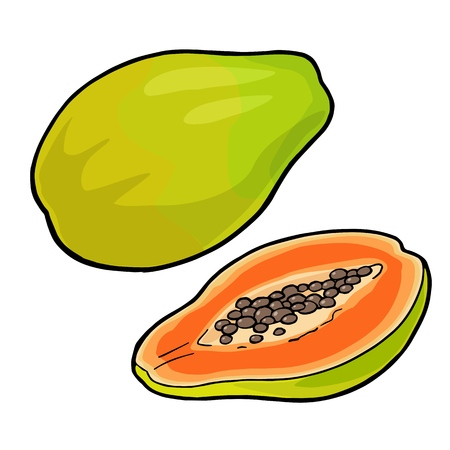 Whole and half papaya vector vintage engraving color.