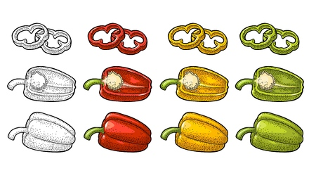 Sweet bell red, green, yellow pepper vector vintage color and black engraving illustration for menu, poster, label. Isolated on white background hand drawn design element for label and poster. Ilustração