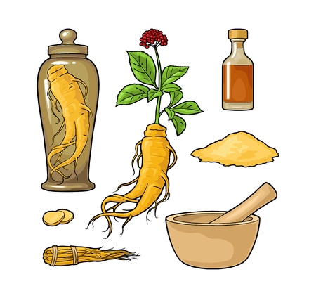 Set panax ginseng. Root, slice, bunch tied by rope, leaves, mortar, pestle, glass bottle of tincture. Vector engraving vintage color illustration for traditional medicine. Isolated on white background