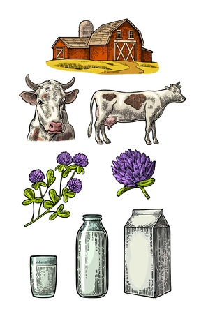 Set milk farm, cow head, clover, box carton package, glass and bottle vector engraving vintage color illustration isolated on white background.