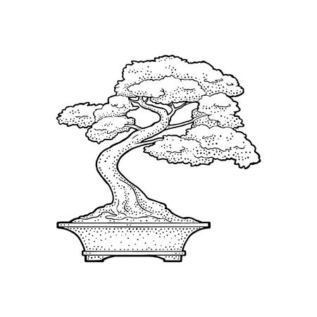 Bonsaiboom in pot, Vintage zwarte vector gravure illustratie geïsoleerd op een witte achtergrond. Hand getrokken ontwerpelement Stockfoto - 95613932
