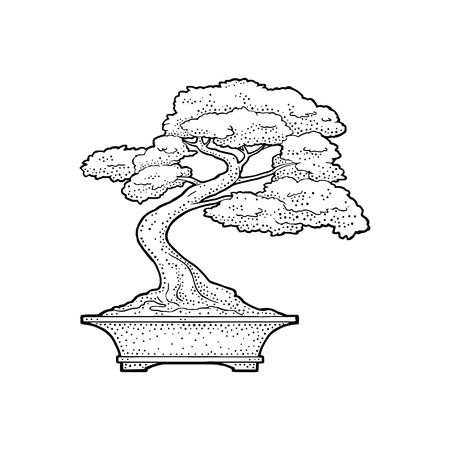 Bonsai tree in pot, Vintage black vector engraving illustration Isolated on white background. Hand drawn design element