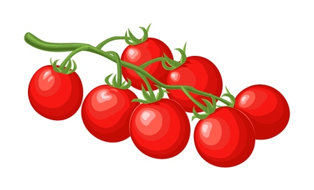 Branch of tomatoes. Vector flat color illustration.
