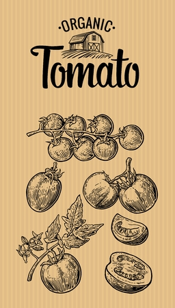 Set of hand drawn tomatoes on brown background. Tomato, half, slice. Vintage vector engraving illustration for logotype, label, poster, corporate identity, badges, presentations for organic farm.