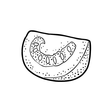 Slice tomato. Vector engraved illustration isolated on white background.
