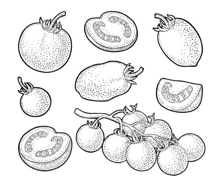 Set of hand drawn tomatoes. Branch, whole and slice. Ilustração