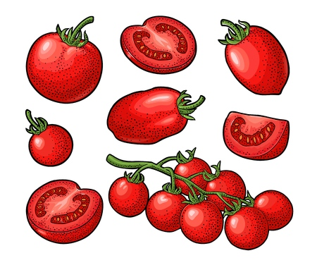 Set of hand drawn tomatoes. Branch, whole and slice. Ilustrace