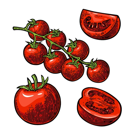 Set of hand drawn tomatoes. Branch, whole and slice. Stock Illustratie