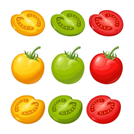 Set of hand drawn tomatoes isolated on white background. Branch, whole, half and slice. Flat vector color illustration. Hand drawn design element for label and poster Фото со стока - 97024752