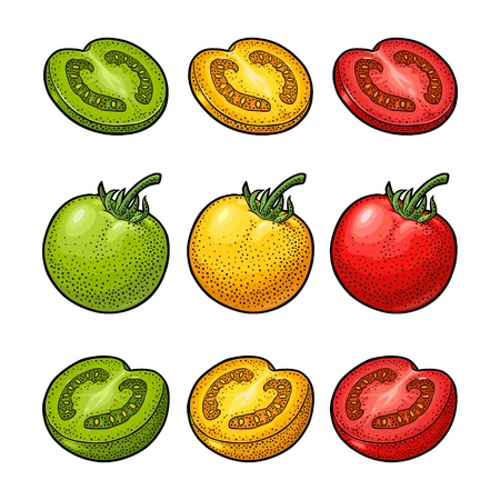 Set of hand drawn tomatoes isolated on white background. Branch, whole, half and slice. Engraving vintage vector color illustration. Hand drawn design element for label and poster.
