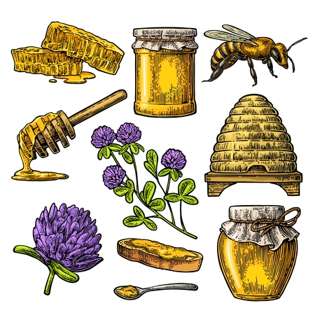Honey set. Jars of honey. Vector vintage color engraved illustration. Isolated on white background.