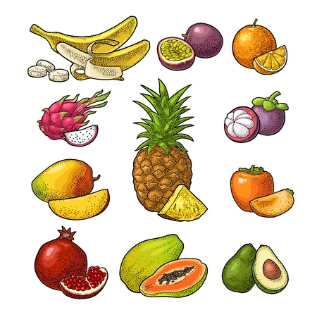 Set fruits isolated on white background. Vector color hand drawn vintage engraving Illustration
