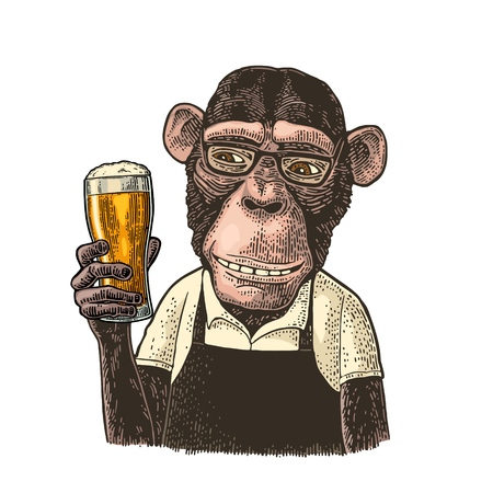 Monkeys fast food worker dressed in apron holding glass of beer. Vintage color engraving illustration. Isolated on white background. Hand drawn design element for poster and t-shirt