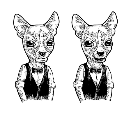 Dog hipster in bow tie and waistcoat, shirt. Vintage black engraving illustration for poster. Isolated on white background