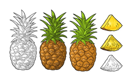 Whole and slice pineapple. Vector color and black vintage engraving illustration for menu, poster. Isolated on white background