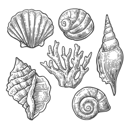Sea shell set, black engraving vintage illustrations. Isolated on white background. Иллюстрация