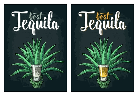 Cactus blue agave with glass gold and silver tequila. Vintage vector engraving illustration for label, poster, web on dark background