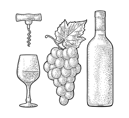 Wine set. Bottle, glass, corkscrew, bunch of grapes with berry and leaf. Vintage color engraved vector illustration isolated on white background. For label poster, web. Ilustração
