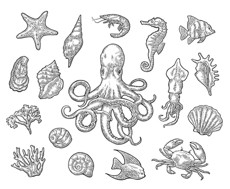 Set sea animals. Shell, coral, crab, shrimp, star, fish ,octopus Vectores