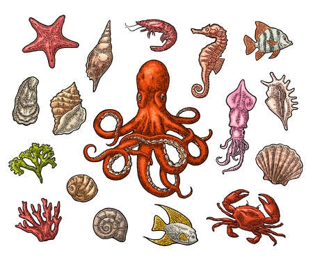 Set sea animals. Shell, coral, crab, shrimp, star, fish ,octopus Illustration