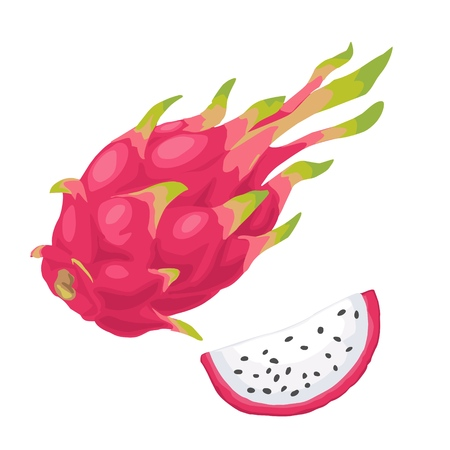 Dragon fruit whole and slice. Vector flat color illustration