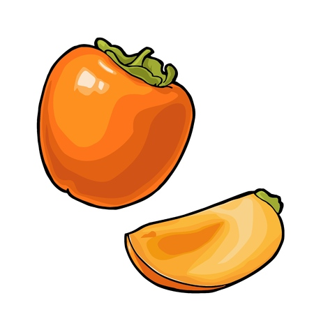 Whole and half persimmon. Vector vintage engraving color Illustration