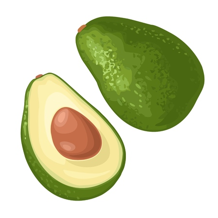 Half avocado with seed. Vector flat color illustration