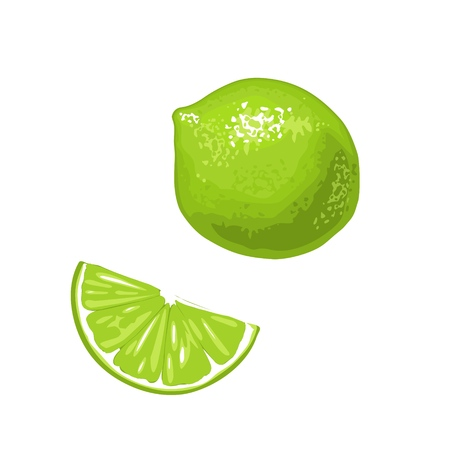 Lime slice and whole.Vector color flat engraving